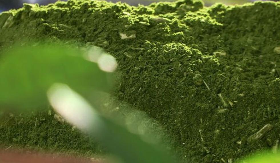 Por que a erva-mate é moída grossa?