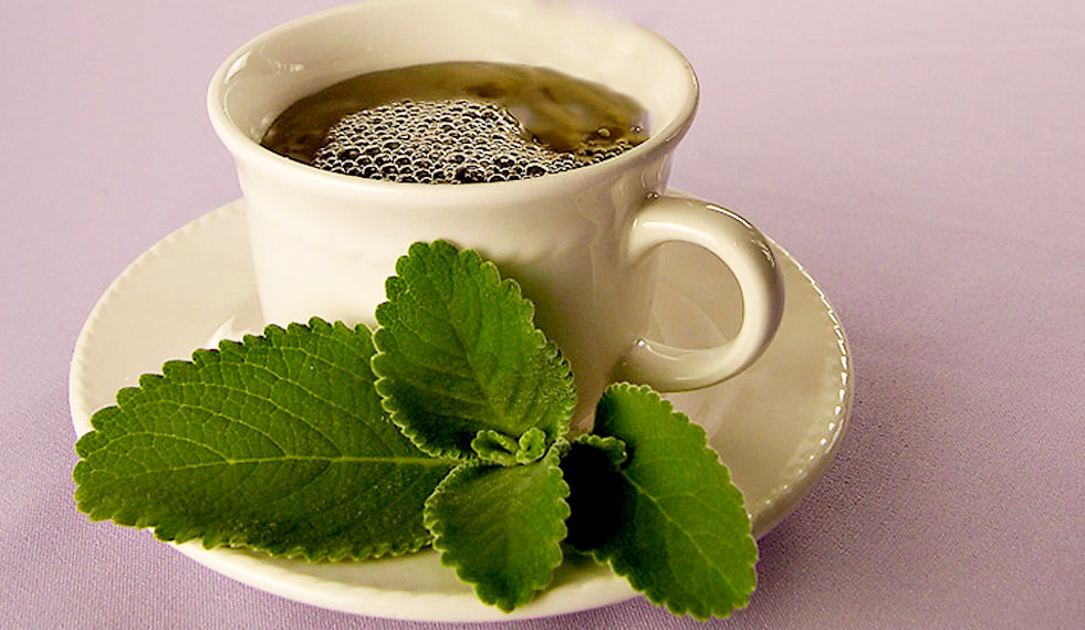10 benefícios sobre chá de boldo que você não sabia